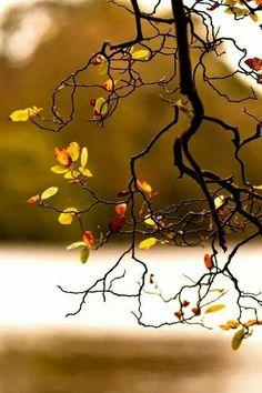 가을 ....낙옆^^