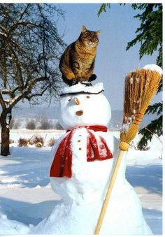Kitty on the snowman...cats are so irreverent!