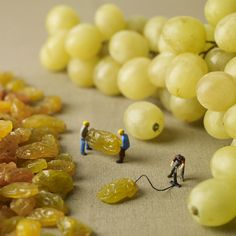 Funny pictures about How Grapes Are Really Made. Oh, and cool pics about How Grapes Are Really Made. Also, How Grapes Are Really Made photos. Miniature Photography, Food Photography, Creative Photography, Amazing Photography, Whimsical Photography, Micro Photography, Learn Photography, Concept Photography, Foto Art