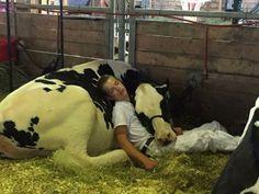 Фотографии с очаровательными коровами, доказывающие, что они — это просто большие собаки (18 фото)