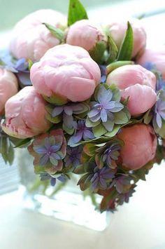 Pink Peonies  Blue Hydrangea