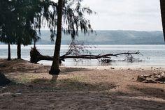 A fallen tree in Lobito, Angola