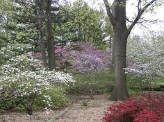 woodlands garden - Yahoo Image Search Results