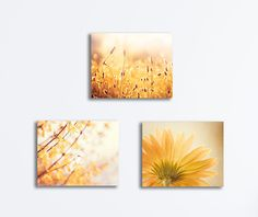 3 Piece Canvas Set - Three nature photography canvases in beautiful golden yellow tones. ➤ ➤ Fine art print set available here: