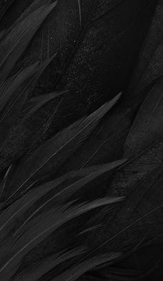 Ed Wallpaper, Feather Wallpaper, Black Wallpaper Iphone, Wallpaper Backgrounds, Matte Black Background, Feather Background, Dark Photography, Aesthetic Colors, Black Feathers