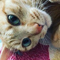 今日の蒸し蒸しな暑さがもう嫌だ。 これが続くと思うとヒーハー!  #戯言 #愛猫 #暑くてもスリスリ #cats #catstagram #ごろにゃんこ #茶トラ