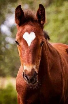 I call it a miracle that a horse can be born with a perfect heart for a temple marking! Loved by chicncheeky.com.au