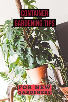 When buying a shade tree, buy a smaller seedling that has been grown in a pot *** Click image for more details.