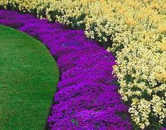 Eye catching way to edge the curves of a lawn area. Lawn Edging, Garden Edging, Outdoor Landscaping, Outdoor Decor, Landscaping Ideas, Flower Beds, Healthy Tips, Google Images, Landscape Design