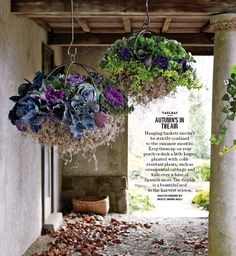 autumns in the air ngoc minh ngo - Ornamental cabbage, kale over a base of spanish moss
