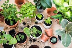Want to know what air purifying plants you can put in your home? If you want to have clean and fresh air naturally, these houseplants are for you! Organic Soil, Organic Gardening, Urban Gardening, Balcony Gardening, Grow Organic, Organic Herbs, Indoor Gardening, Planting Vegetables, Growing Vegetables