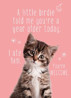 Are Cats Nocturnal Funny Birthday Message, Funny Happy Birthday Wishes, Happy Birthday Pictures, Birthday Wishes Quotes, Happy Birthday Greetings, Funny Birthday Cards, Funny Birthday Quotes, Birthday Msgs, Birthday Funnies