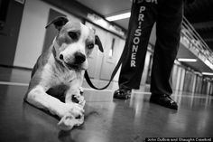 Who Rescued Whom? Shelter Dogs and Prison Inmates Give Each Other a New Leash on Life|Dr. Patricia Fitzgerald