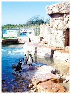 The SA Marine Rehabilitation Centre (SAMREC) samrec-penguin-pool Penguin Pools, Port Elizabeth, Nelson Mandela, South Africa, Centre, Cape, African, Activities, Beach