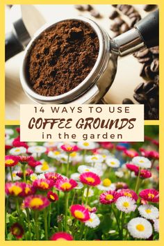 Don't toss those coffee grounds, used coffee grounds can be put to use in your garden in 14 different ways that will help your garden & the planet. Diy Garden Bed, Garden Shop, Diy Garden Decor, Garden Art, Coffee Grounds Garden, Uses For Coffee Grounds, Coffee Uses, Acid Loving Plants, Lawn Fertilizer