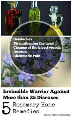 Invincible Warrior Against More than 25 Diseases - 5 Effective and Useful Rosemary Home Remedies - Tiptop Home Remedies