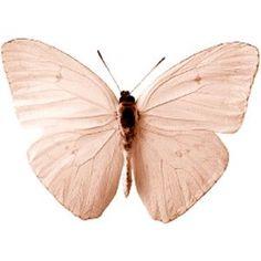 butterfly | blush