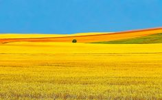 north dakota | North Dakota Fields of Gold | Flickr - Photo Sharing!