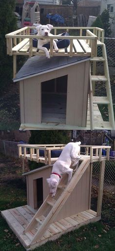 Dog house with platform over roof