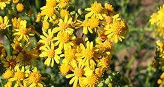 Herbs in the Florida Garden1(VH020)