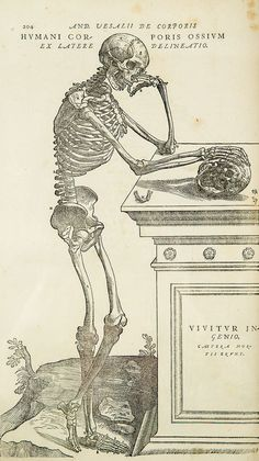 """""""Alas, poor Yorick, and poor me""""= this skeleton from a popular 16th century anatomy textbook."""