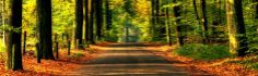 road to autumn nature wallpaper Heaven Wallpaper, Next Wallpaper, Widescreen Wallpaper, Nature Wallpaper, Autumn Nature, Autumn Forest, Image 3d, Forest Road, Day Lilies