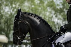 Equestrian Chic, Equestrian Problems, Horse Training Tips, Horse Tips, Equine Photography, Lifestyle Photography, Horse Riding Clothes, English Riding, Horse Trailers