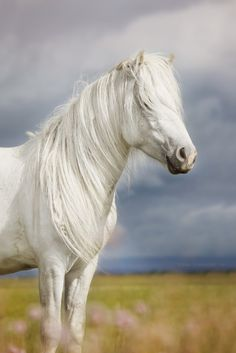 Long Manes Horses Learn about #HorseHealth #HorseColic http://www.loveyour.horse
