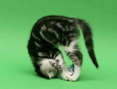 無我の境地?動物たちがヨガっぽいポーズをするとかわいさが加速する21枚の写真 : カラパイア