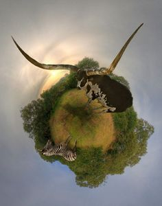 Little planets by Josh Sommers - Stereographic Projections photography