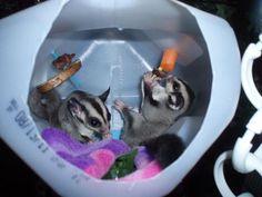 GliderGossip - foraging toys & other stimulation methods