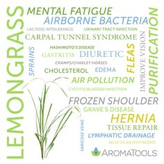 Essential Oil Spotlight: Lemongrass Lemongrass essential oil is steam-distilled from the leaves of the Cymbopogon flexuosus. Its lemony, earthy aroma may promote awareness and purification. Historically, lemongrass has been used for … Doterra Essential Oils, Essential Oil Diffuser, Essential Oil Blends, Yl Oils, Baby Massage, Young Living Oils, Young Living Essential Oils, Arthritis, Aroma Tools