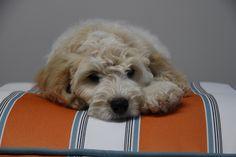 Cute dog on Oscar & lulu's Wallace bed