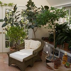 Sunroom Ideas - plant shelf view 2