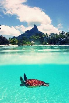 Ocean. Turtle. Mountain.