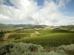 The vineyards of Creation, Hemel en Aarde (Heaven and Earth) valley near Hermanus