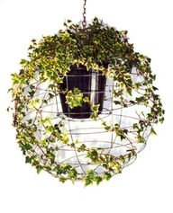 Hanging ivy basket with wire orb to create a round hanging topiary. #Garden #Decor