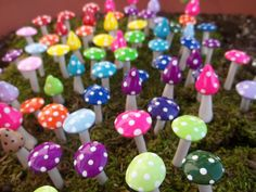 Hey, I found this really awesome Etsy listing at https://www.etsy.com/listing/113170788/free-us-shipping-10-miniature-mushrooms