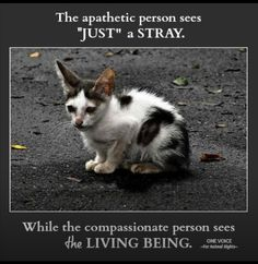228 Best Be Kind To Animals Images Animal Rescue Animal