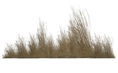 Image from http://img00.deviantart.net/4b3f/i/2013/077/4/9/dry_vegetation_04_by_wolverine041269-d5yfux8.png.