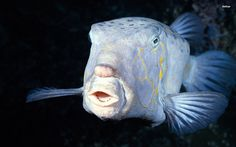 fish - Full HD Wallpaper, Photo