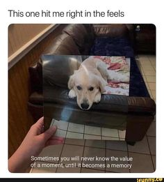 Ideas for funny girl stuff sad Animals And Pets, Baby Animals, Funny Animals, Cute Animals, I Love Dogs, Cute Dogs, Miss My Dog, Pet Remembrance, Pet Loss