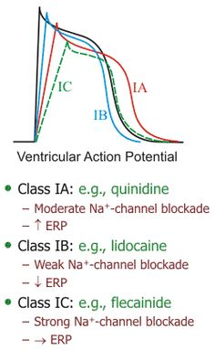 ventricular action potential with Class IA, IB and IC antiarrhythmic drugs