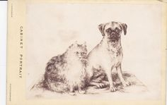 RP, Cabinet portrait of cat & Pug Dog , 1890s