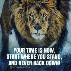 """Daily motivational quotes life with best inspirational quotes for success """"I've learned that people will forget what you said, people will forget Motivation Positive, Positive Quotes, Motivational Quotes, Inspirational Quotes, Citation Lion, Favorite Quotes, Best Quotes, Lion Quotes, Tiger Quotes"""