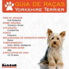 O #Yorkshire Terrier é muito dócil, ótima opção para quem tem crianças, adora uma aventura e encrenca.