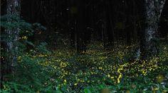 Long exposure shot of fireflies.. looks like a fairytale forest