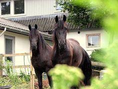 Har du talt med din hest dag? Www.hesteverden.dk