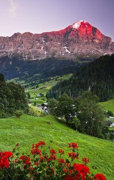 Eiger Peak, Grindelwald Switzerland  夕焼けなのかな。山が赤く染まってます。