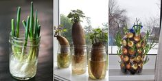 Vegetables and herbs that are easy to regrow at home from leftover scraps.